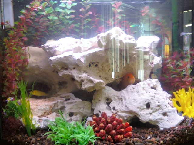 Fish/African Cichlid and Nitrite Levels