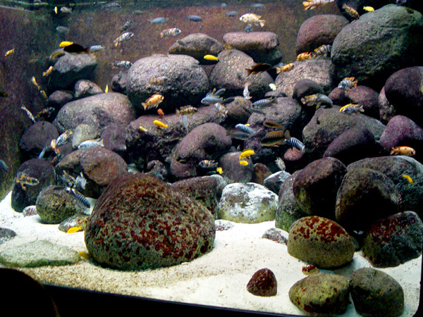 Aquascaping Ideas For African