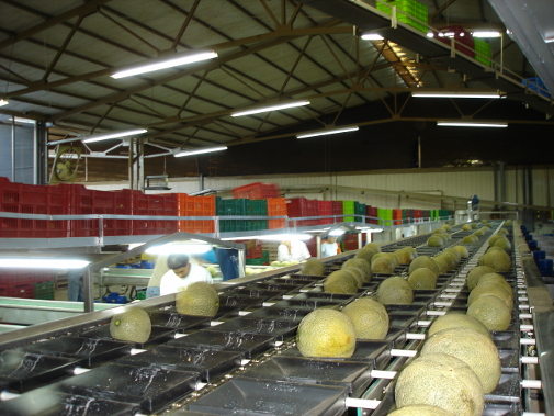 Melons industries in Africa