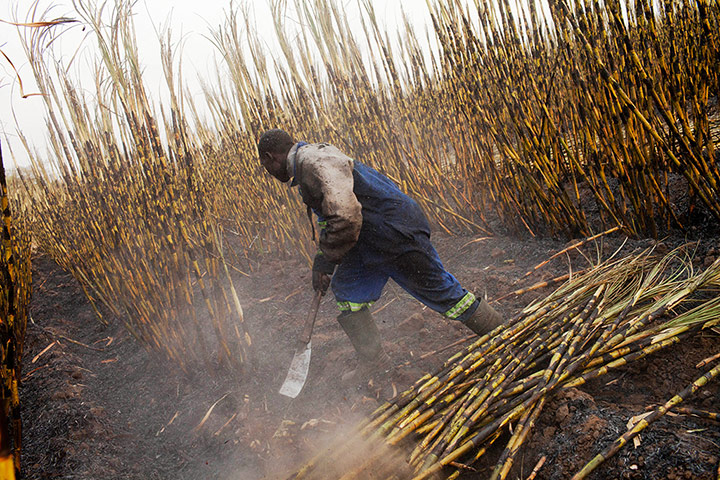 Sugar production in Africa