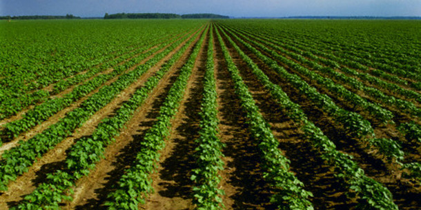 Tips for agriculture investors in Africa