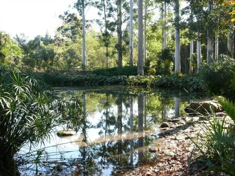 Water reflections, Botanical Gardens project