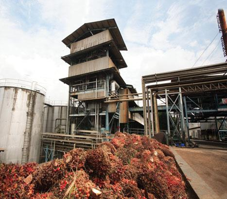 How can one Make use of Palm Oil in Africa