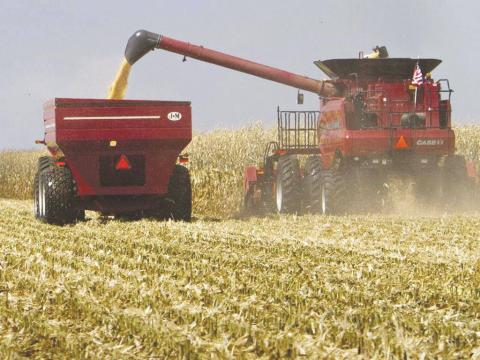 Africa records drop in cereal production
