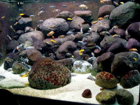industry Aquariums in  Africa