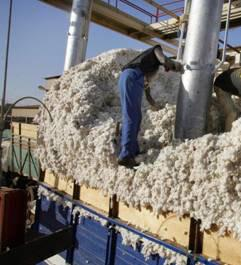Cotton processing in Africa