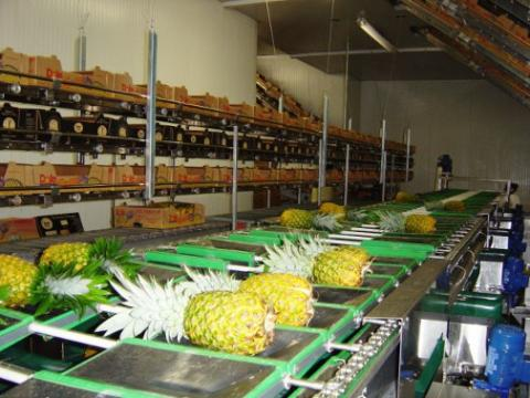 Ananas industries in Africa