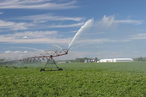 Irrigated Vegetable Production in Africa