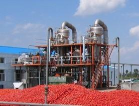 Ketchup Tomato paste Production in Africa