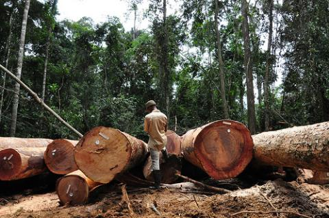 Liberia to Restart Logging