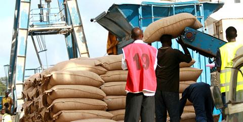 Rift maize production in Africa to export