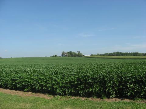 Soybean fields in Africa